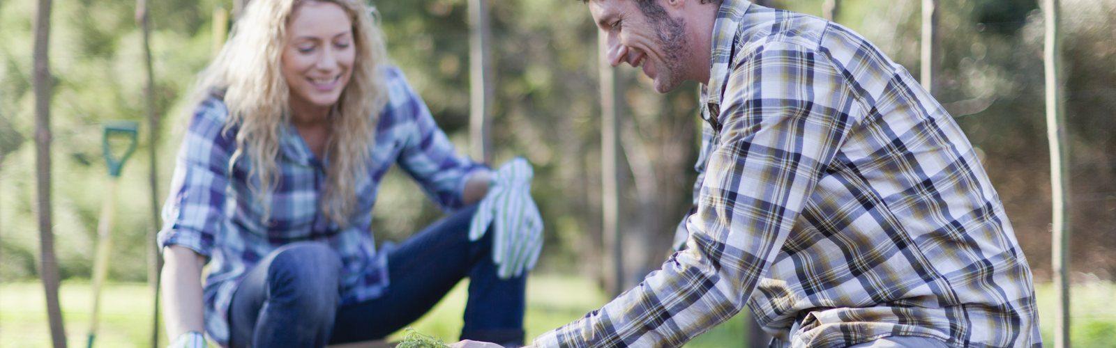 Lachendes Pärchen beim Gärtnern in einem Garten. Er legt Möhren in eine Kiste, sie sticht Möhren mit einer Schaufel aus.